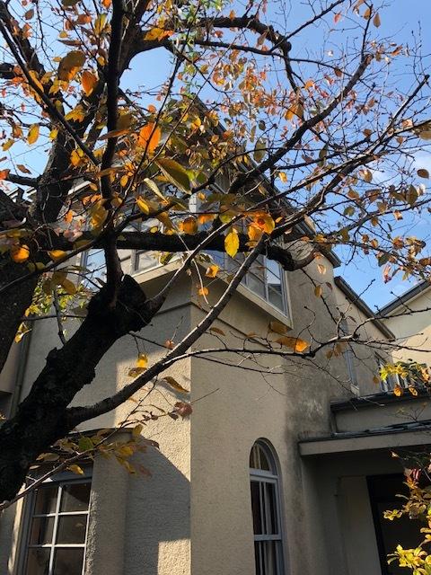 建物外観 秋は紅葉も楽しめます